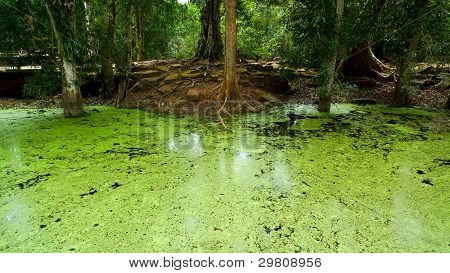 swamp in jungle