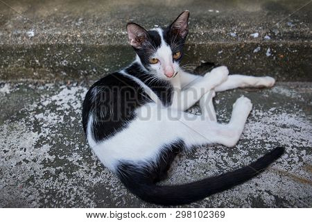 Black And White Cat Resting On A Concrete Pavement