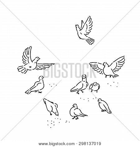 Flock Of Urban Wild Pigeons Pecks Seeds. Set Flying And Sitting Birds Line Art Style Character Vecto
