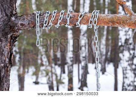 Metal Chain Wound Around A Pine Branch, Winter Time Forest