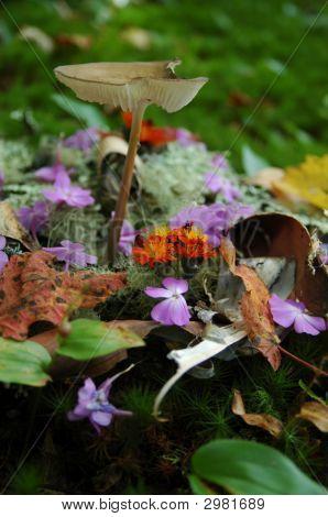Mushroom and flowers no.2