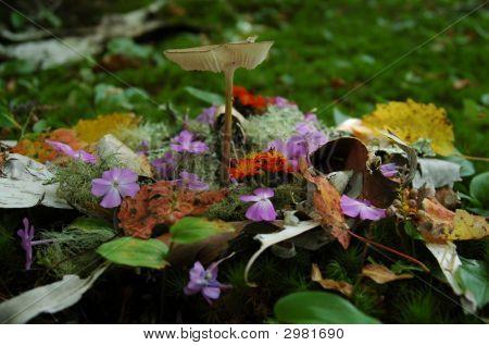 Mushroom and flowers