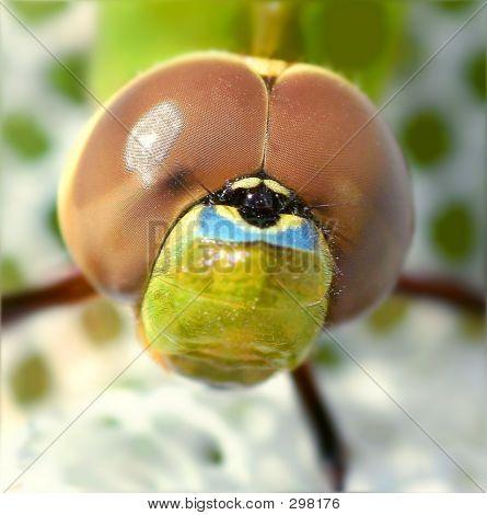 Dragonfly Super Macro