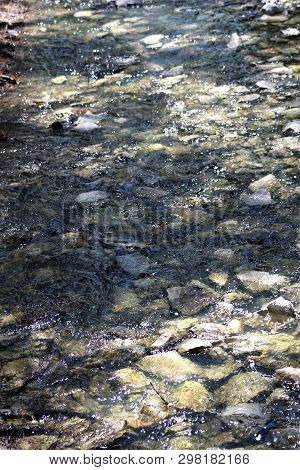 Clear, Cool Water Flowing Across A Rocky Stream Bed On A Spring Afternoon.