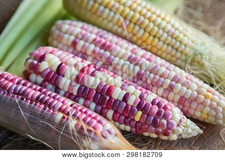 Colorful Small Ears Waxy Corns With Silk, Corn Leaf And Old Wooden Background. Corns On The Wood. Fr