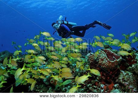 Scuba Diver and School of French Grunts