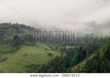 Just Before Sunrise The Forest Is Covered With Thick Fog, Poland, Pieniny