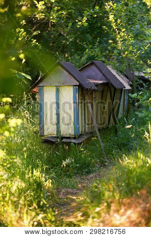Neglected Beehives Located In An Old Orchard With Apple Trees