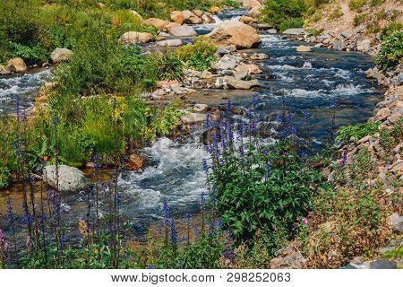 Group Of Beautiful Purple Flowers Of Larkspur Near Mountain Creek Close-up. Rich Vegetation Of Highl