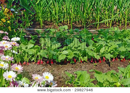 Garden Bed And Flowers
