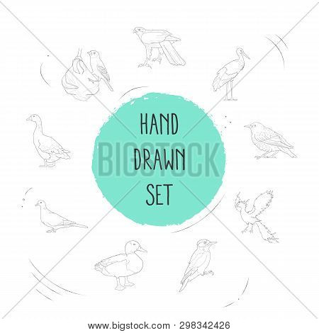 Set Of Ornithology Icons Line Style Symbols With Weaver Bird, Duck, Goose And Other Icons For Your W