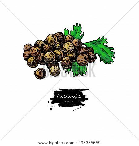 Coriander Seed Heap Vector Hand Drawn Illustration. Isolated Spice Object.