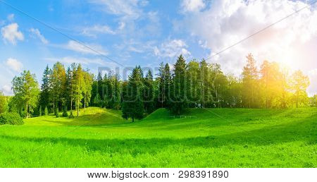 Forest spring landscape - dense forest spring trees in the valley in sunny spring weather. Panorama of forest spring nature
