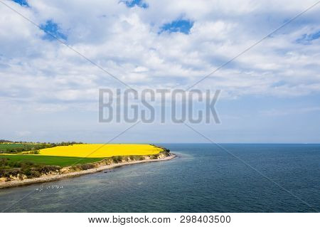 On The Steep Coast Of Boltenhagen The Rapeseed Blooms In Bright Yellow
