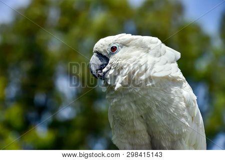 White Parrot Zoo, Pretty, Sulphur, Tree, Parrot Native Feather Avian Australian