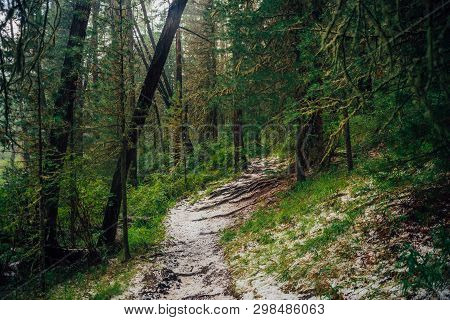 Hailstone On Trail In Dark Coniferous Forest. Atmospheric Woodland Landscape With Rich Forest Flora.
