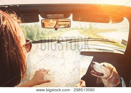 Woman Traveling With Her Lovely Beagle Dog By Convertible Car And Planning Itinerary Using The Paper