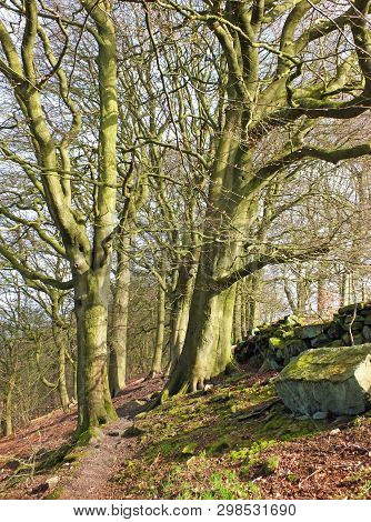 A Rocky Hillside Path On Hillside Woodland With Early Spring Trees In Crow Nest Woods In West Yorksh