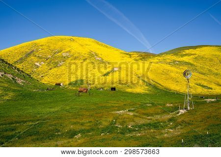 Rustic Windmill And Farm In Carrizo Plain National Monument During The California Superbloom. Rollin