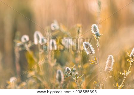Juicy Grass And Gentle Flowers In The Field On A Sunset Backlight, Dolly Shot, Shallow Depth Of The