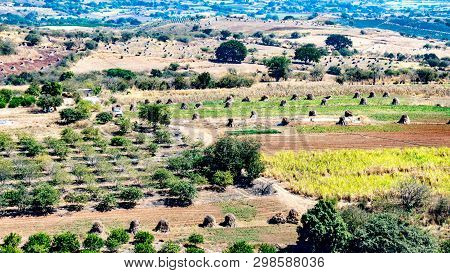Agricultural Land With Fruit Trees, Stacks Of Hay And A Car Driving On A Dirt Road, Beautiful Sunny