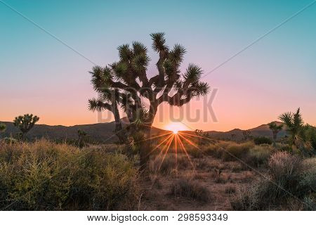 Sunburst Among The Joshua Trees In Joshua Tree National Park In Southern California, Usa