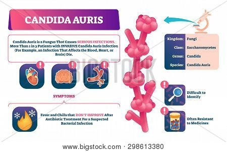 Candida Auris Vector Illustration. Biological Fungus Infection Explanation. Labeled Invasive Disease