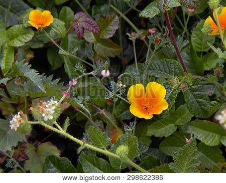 California Wild Flowers And Plants. Floral Background.