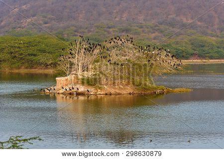 Tree With Birds In Man Sagar Lake In Jaipur. Rajasthan. India
