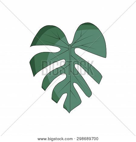 Tropical Leaves Isolated On The White Background. Monstera. Vector Illustration.