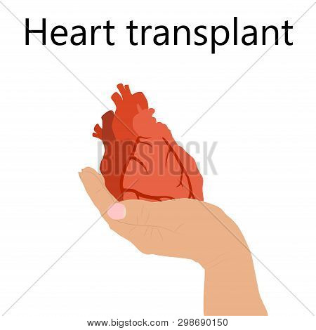 Heart Cardiac Transplant. Hand Holding A Human Heart. Vector Flat Illustration.