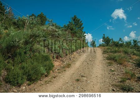 Dirt Road On Hilly Terrain Covered By Bushes And Trees