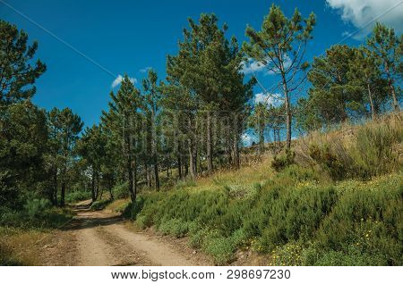 Dirt Road Passing Through Hilly Terrain Covered By Bushes And Trees, In A Sunny Day At The Highlands