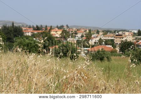 Close-up Of The Ripe Oat Ears Growing In A Field With A View Of A Mediterranean Village, The Mountai