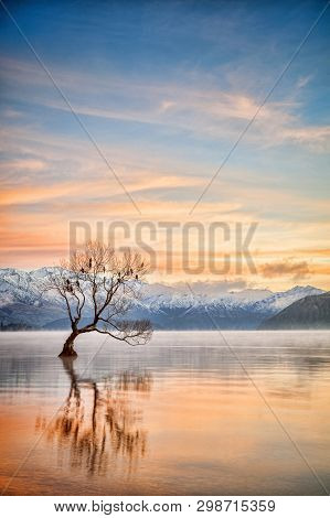 Winter At Lake Wanaka, Otago, New Zealand, With Birds Roosting In The Single Tree And Mist Rising Fr