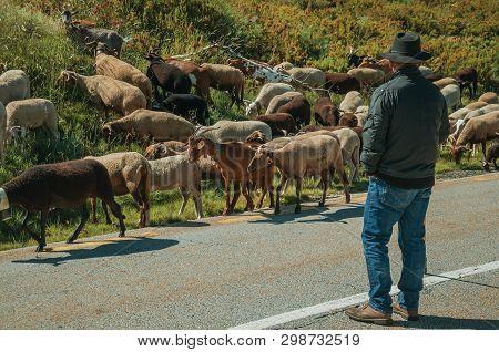 Shepherd With Flock Of Goats Grazing Beside Road