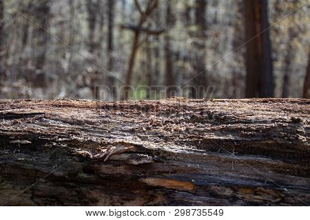 Forest Decay Outlook Solitude Alone Lonely Fallen Tree Stump Natural Background