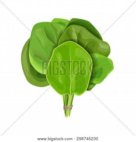Bunch Of Spinach Fresh Juicy Raw Leaves Close Up Isolated On White. Healthy Diet, Vegetarian Food, S