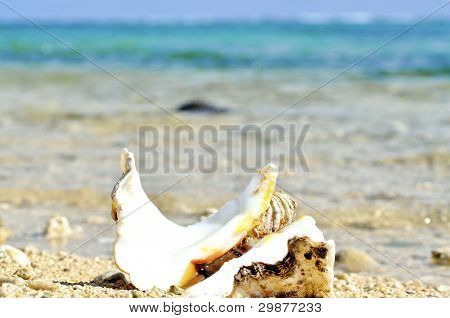 Huge Seashell washed ashore on a tropical island poster