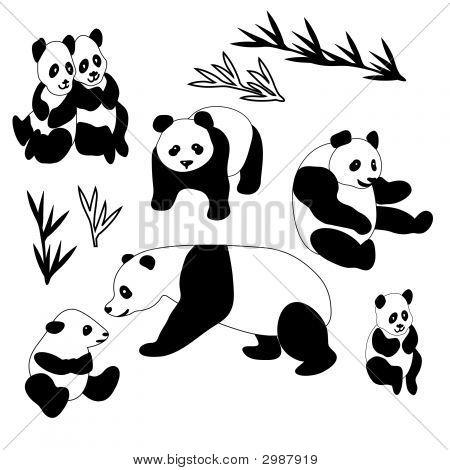 Giant Panda Collection
