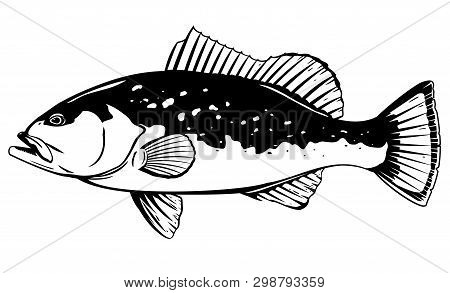 One Red Grouper Fish In Side View, High Quality Illustration Of Sea Fish, Realistic Sea Fish Illustr