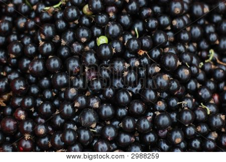 Close-Up Of Black Currants