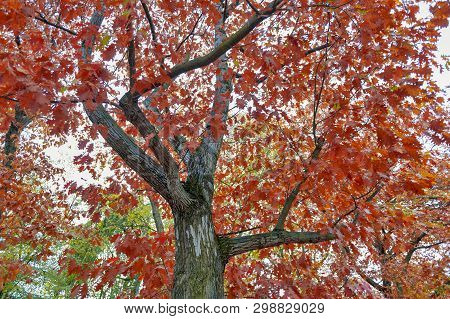 Colorful Red And Yellow Foliage Trees In Garden During Autumn At Wilhelm Külz Park In City Of Leipzi