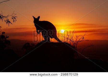 Silhouette Of A Kangaroo On A Rock With A Beautiful Sunset In The Background. The Animal Is Looking