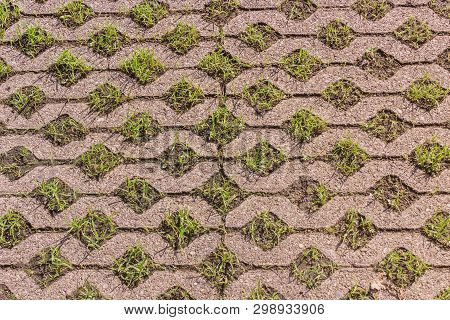Turf Concrete Block Pavers Covered With Growing Green Grass