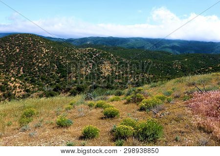 Chaparral Plants And Spring Wildflowers On A Ridge At A Rural Hillside Taken On Arid Badlands In The