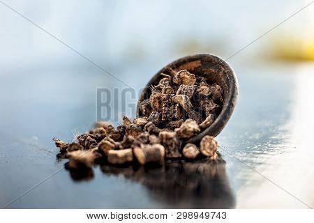 Popular Indian & Asian ayurvedic organic herb musli or Chlorophytum borivilianum or Curculigo orchioides or kali moosli in a clay on wooden surface. poster