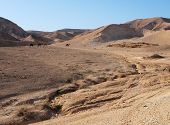 Desert landscape near the Dead Sea with herd of camels poster