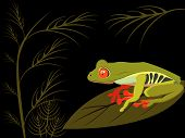 tropical red eyed tree frog vector illustration poster