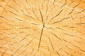 The texture or background of cut down tree trunk with annual or growth rings, cracks and fissures poster